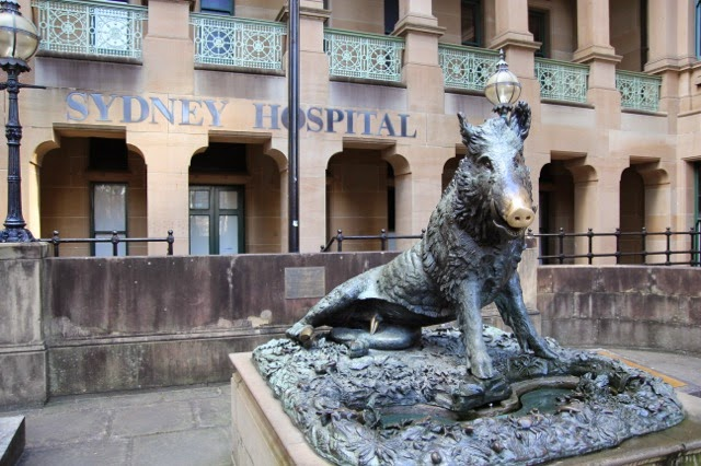 The boar outside the Sydney Hospital - polish his snout for good health although clearly some polish a different part!!