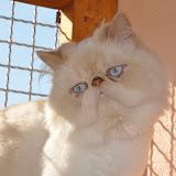 gatti 2012/3