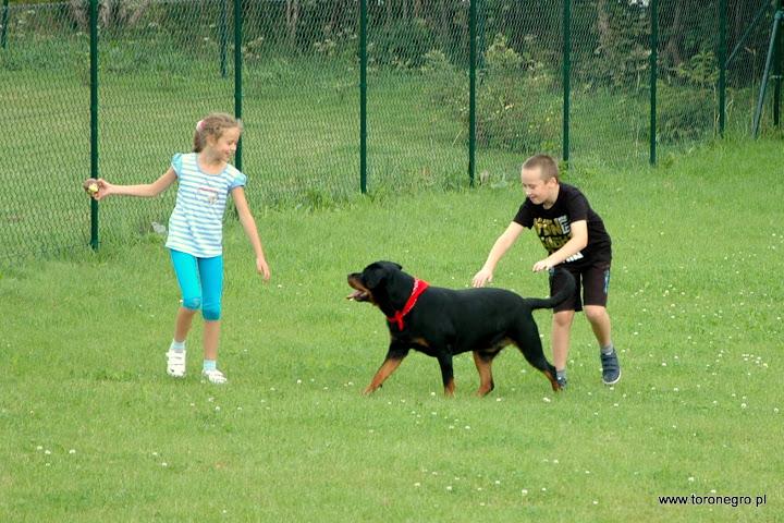 suka toro negro rottweiler bawi się z małymi dziećmi