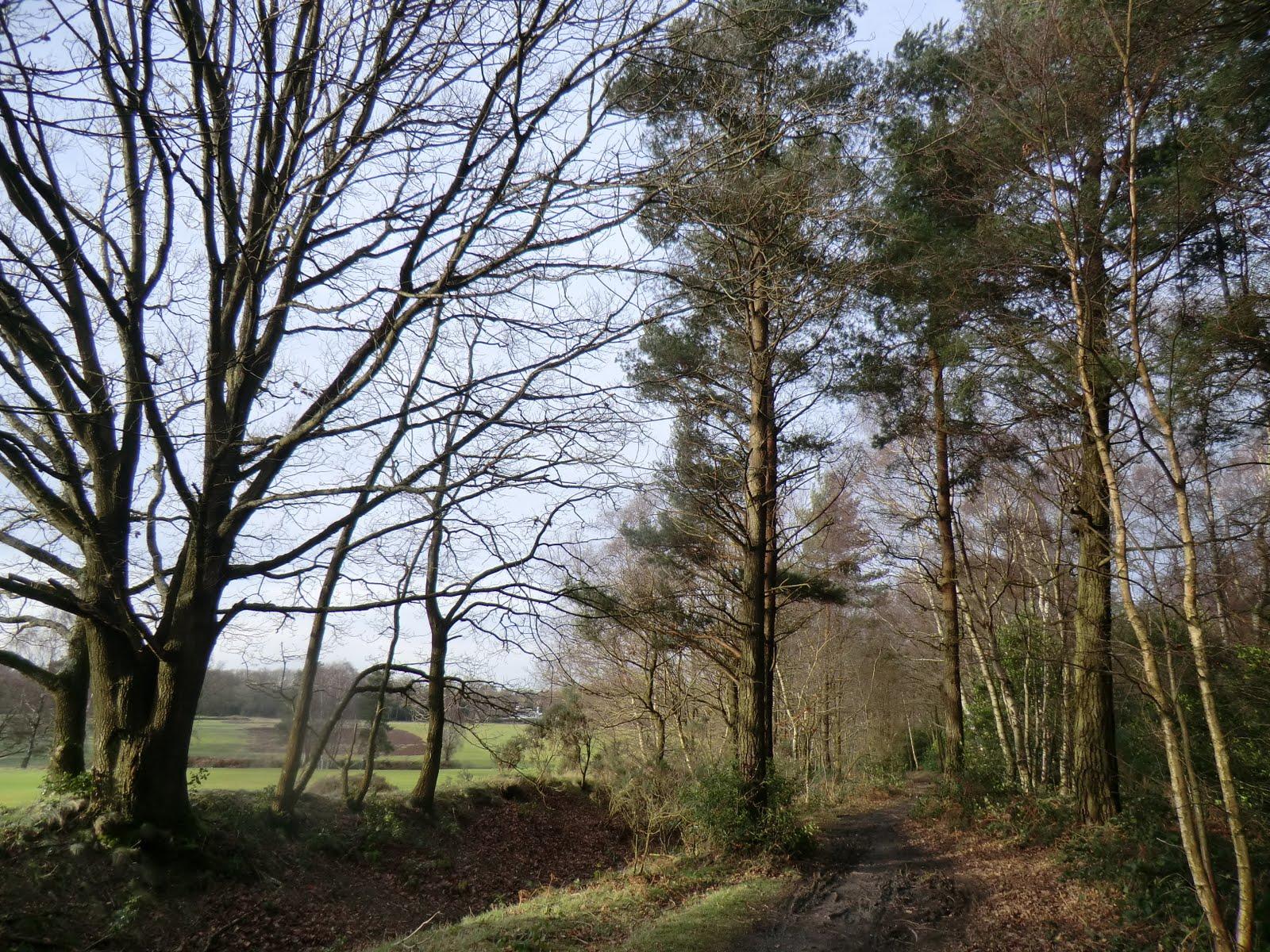 CIMG9906 Walton Heath