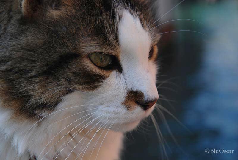 Gatti veneziani 19 02 2010 N 4