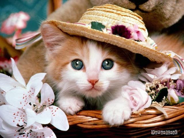 kucingku 3