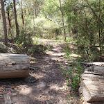 Track through cut log (104353)