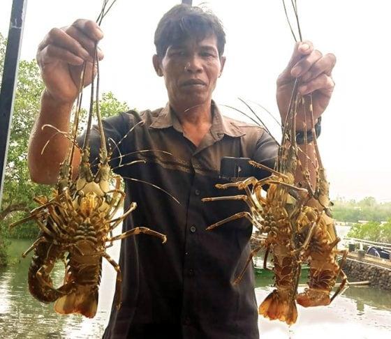KKP Akan Keluarkan Aturan Sanksi Denda Pembudidaya Lobster Terlarang