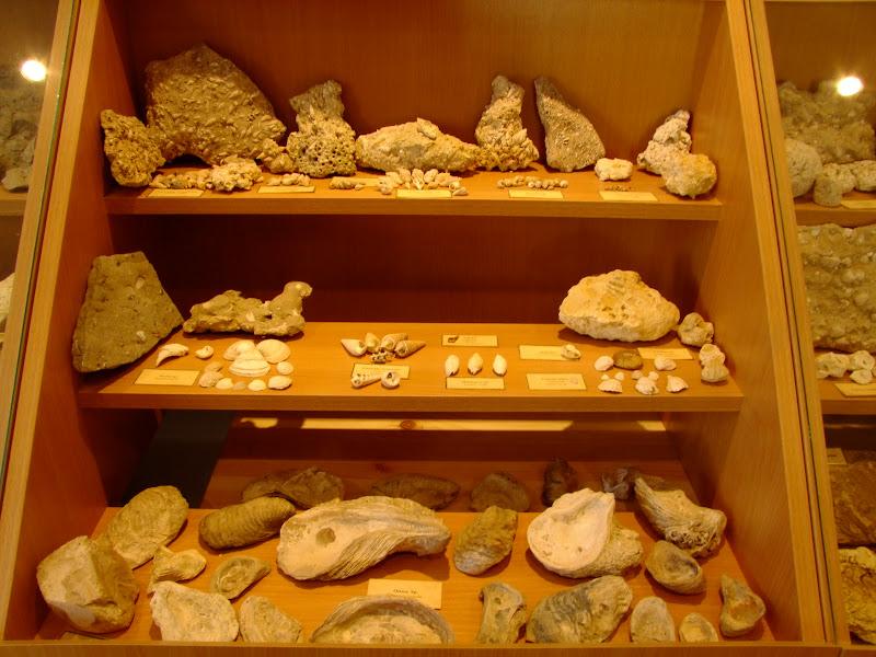 Tengeri maradvány-leletek Vanyarcon