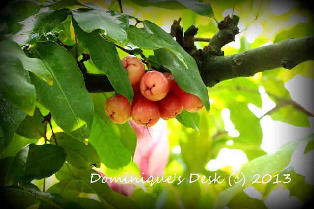 Water Apples