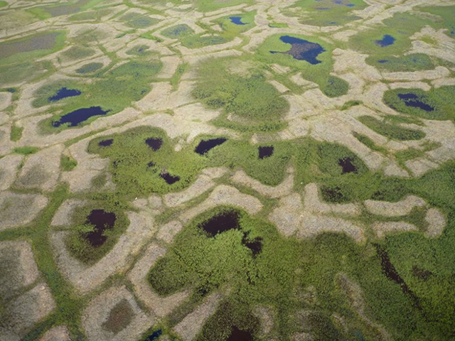 Small freshwater ponds that dot the Arctic tundra have been filling in with vegetation in recent decades. Photo: Christian Andresen