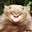 Dustin Brink's profile photo