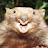 Dustin Brink avatar image