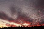 FAIS DE BEAUX RÊVES Coucher de soleil sur une forêt ravagée par des insectes, Parc National de l'Ile Bonaventure et du Rocher Percé