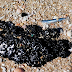 Israel pollution: Tar globs disfigure coast after oil spill