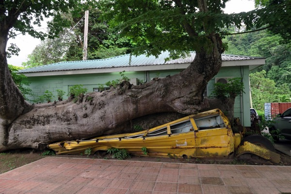 Bus Hurricane David