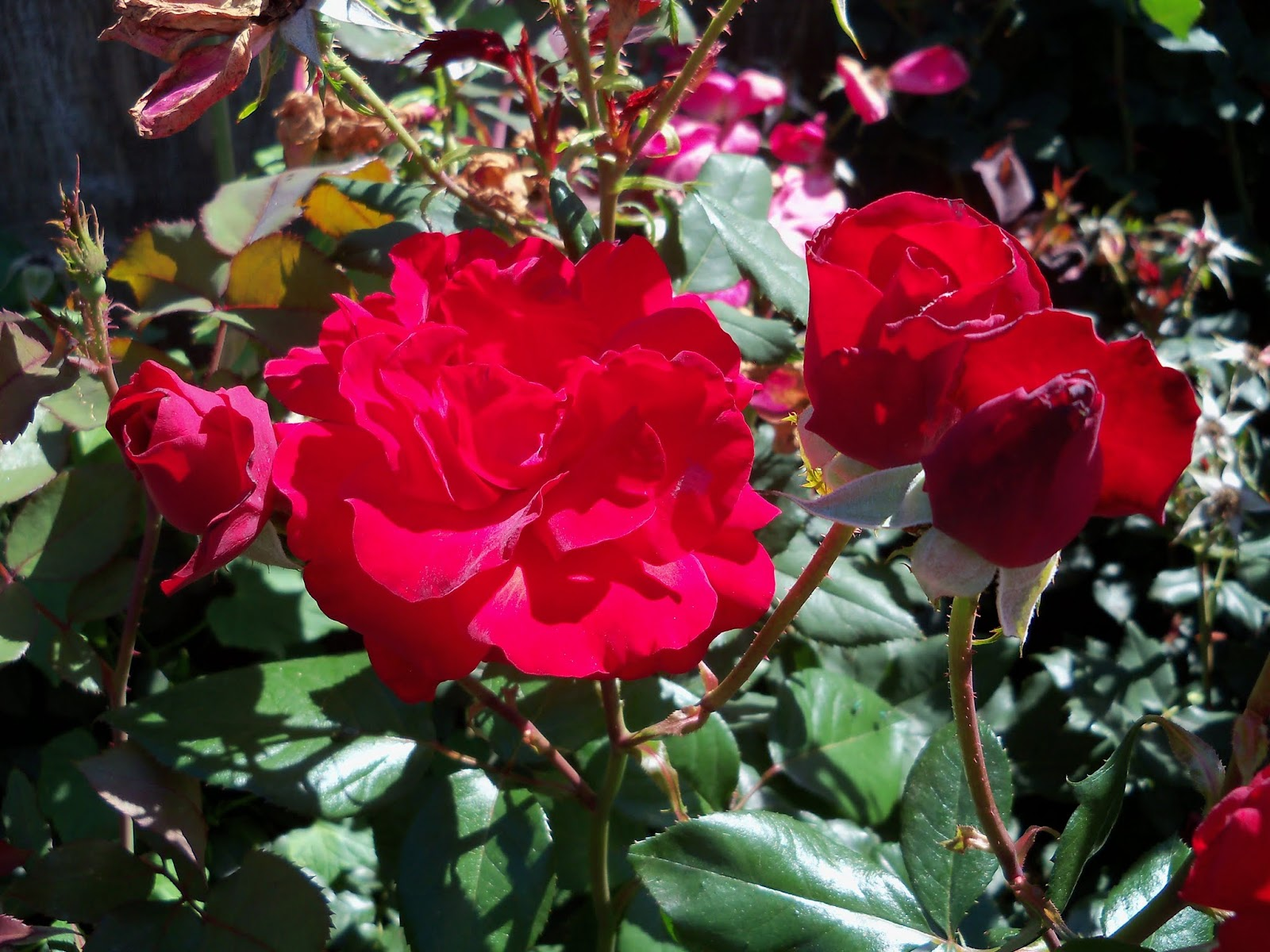 Gardening 2013 - 115_6205.JPG