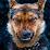 Geoff P (Morokiane)'s profile photo