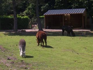 2008.07.01-001 lamas