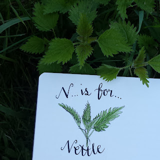 Nettle :: www.AliceDrawsTheLine.co.uk