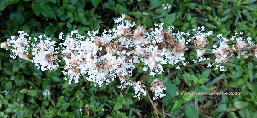 [03-01-basket-plant-flowers%5B5%5D]