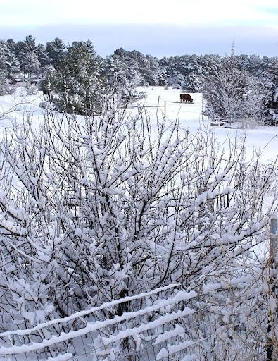 snow2_2013-2013-02-15-10-15.jpg