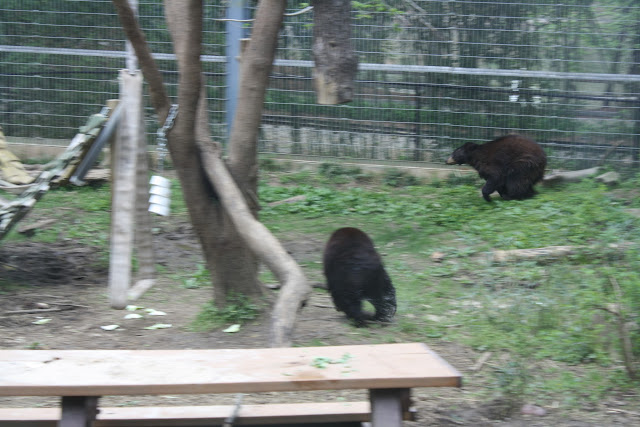 Zoo Snooze 2015 - IMG_7180.JPG