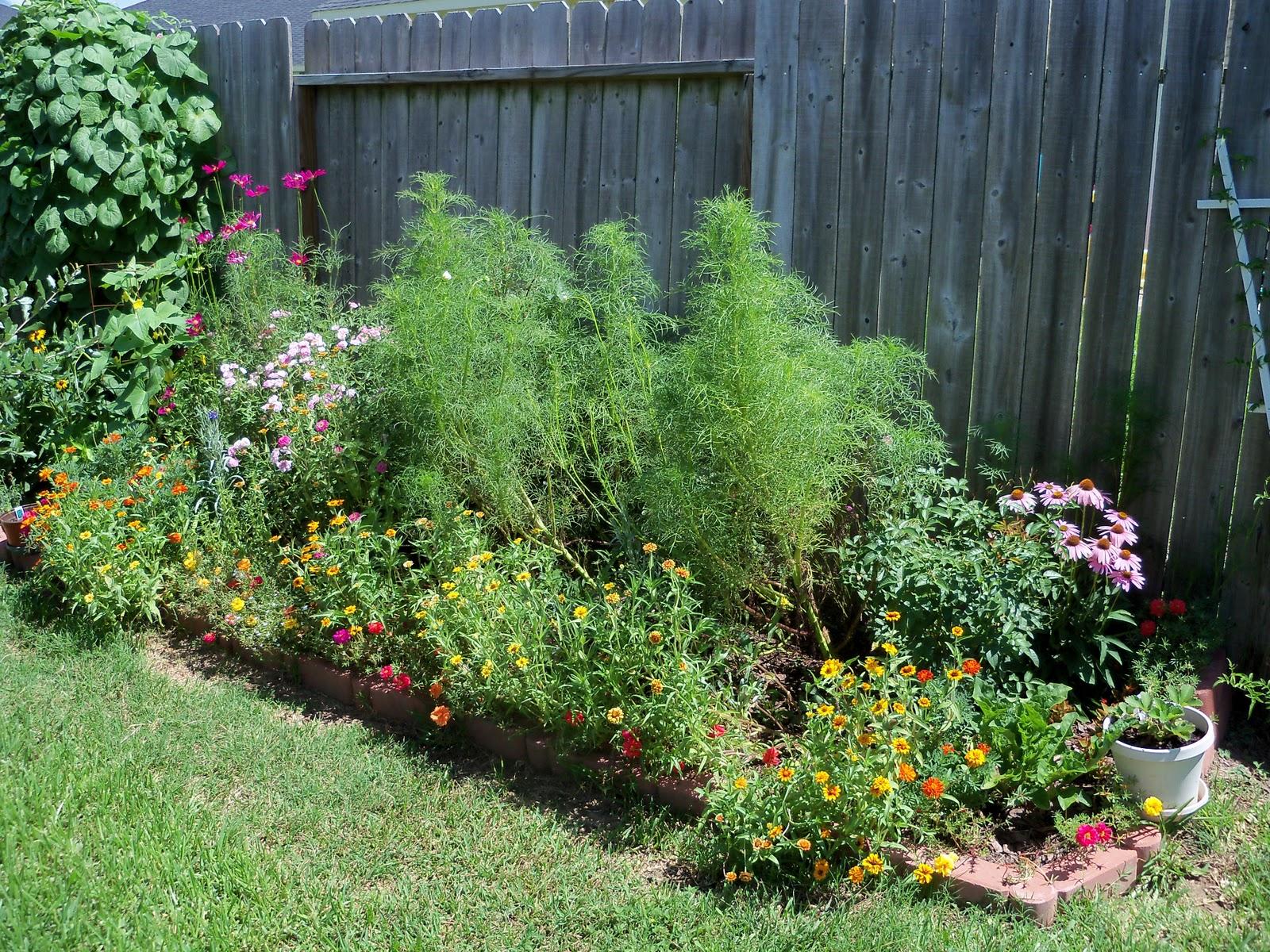 Gardening 2010, Part Three - 101_4348.JPG