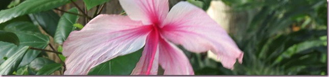 flowernarrowcropIMG_2536