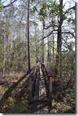 Long bridge over swamp-2