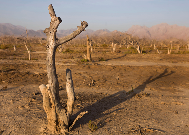 An orchard of dead trees near the village of Pouze Khoon, Iran. Until a decade ago, the pistachio groves were green. Now there is no rain and the groundwater is almost all gone. Photo: Newsha Tavakolian / The New York Times