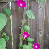 Gardening 2014 - 116_3418.JPG
