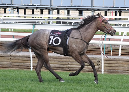 race 5_limestone 3