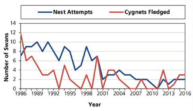 Trumpeter swan nest attempts and cygnets fledged in Yellowstone National Park, 1986–2016. Graphic: Yellowstone Center for Resources