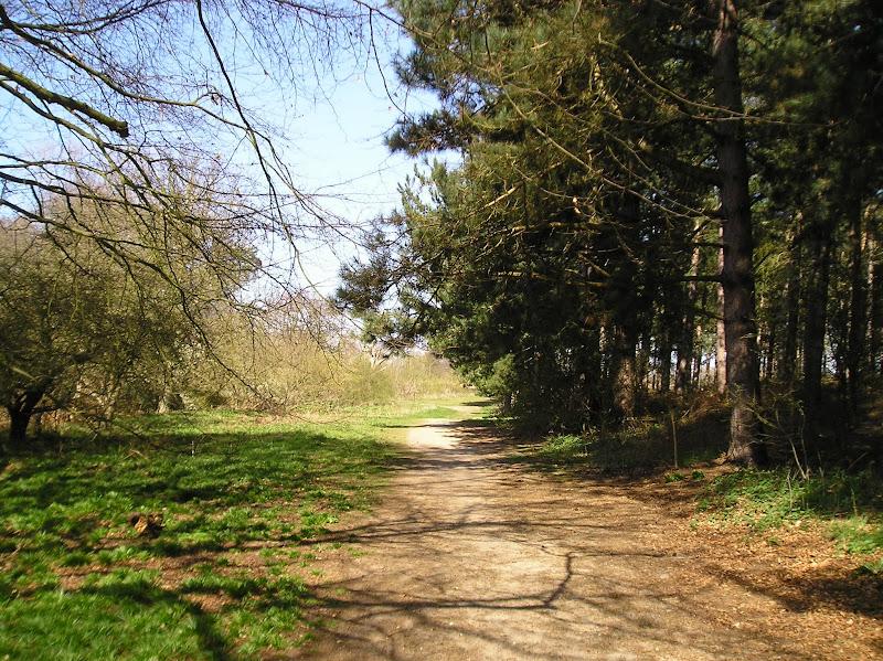Kenton Hill woods