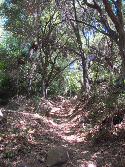 trees arching over the trail