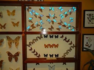 2016.03.14-016 papillons