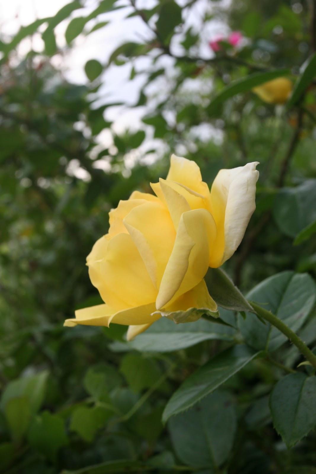 Gardening 2012 - IMG_3354.JPG