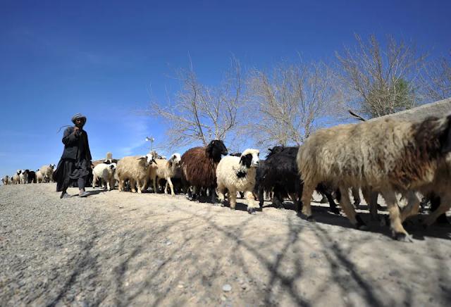 Video muestra a cientos de afganos caminando por el desierto para huir del país y del régimen Talibán