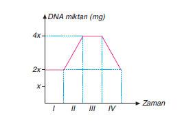 bir hücrede meydana gelen bölünme sırasındaki DNA miktarı