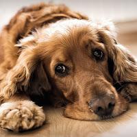 Profielfoto van Honey Dog