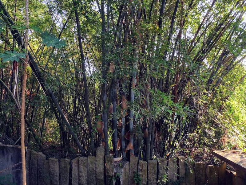 Xiamen.jardin botanique