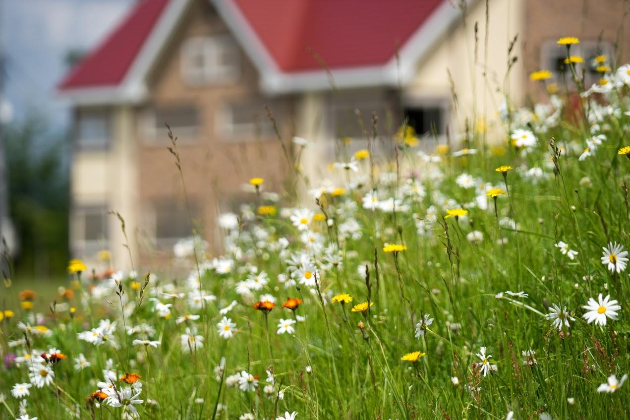 野に咲く小さな花達の戯れ