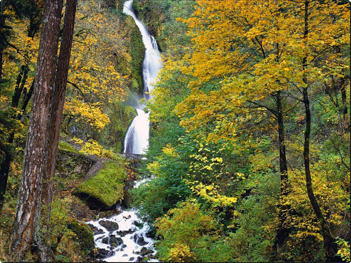 Wahkeena Falls, Columbia River Gorge, Oregon.jpg