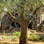 Jeruzalem - Gethsemane
