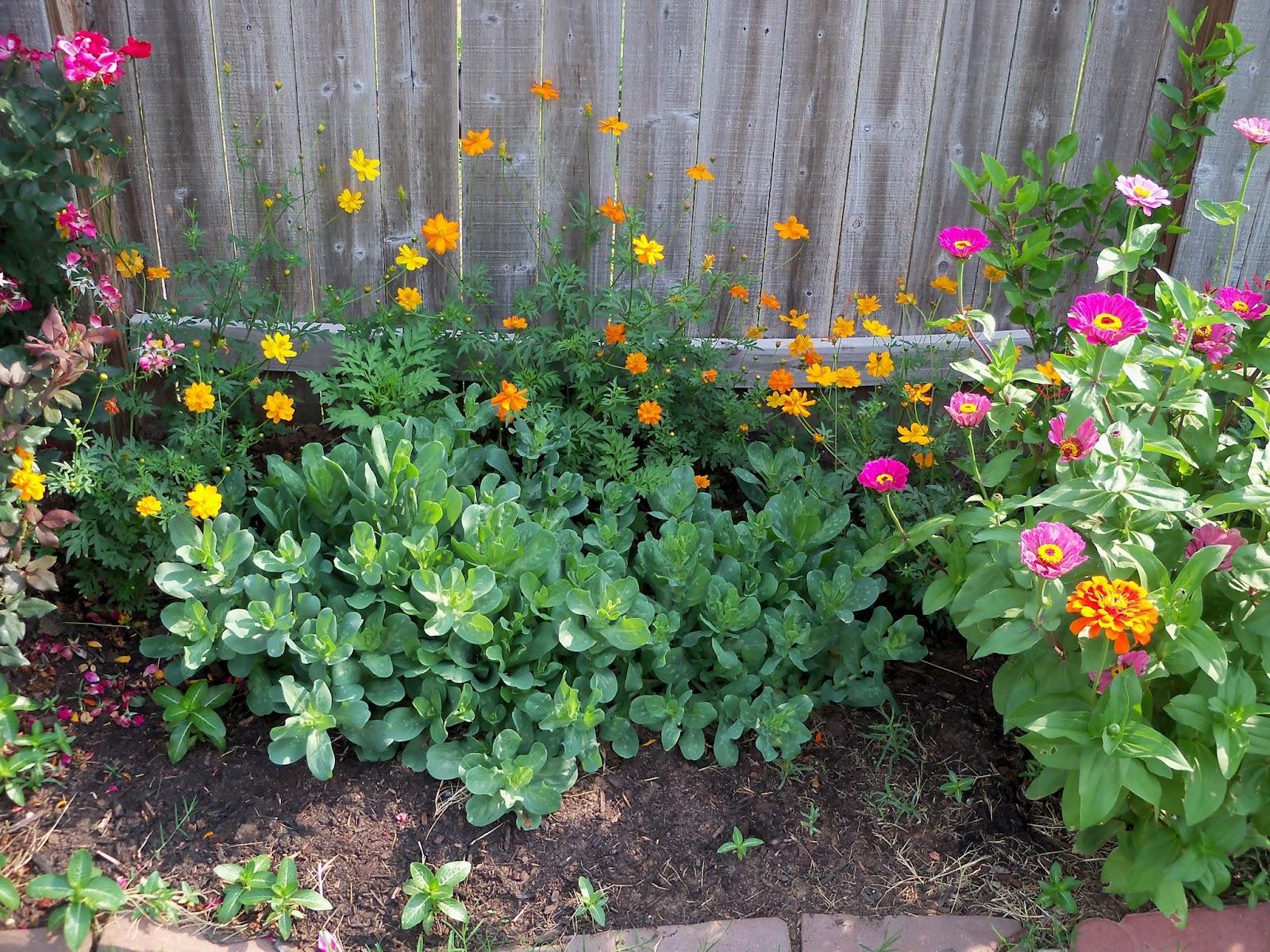 Gardening 2011 - 100_8514.JPG