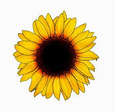 Photo: Sonnenblume 4a