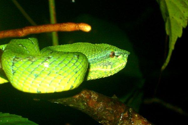 A Viper's Stare
