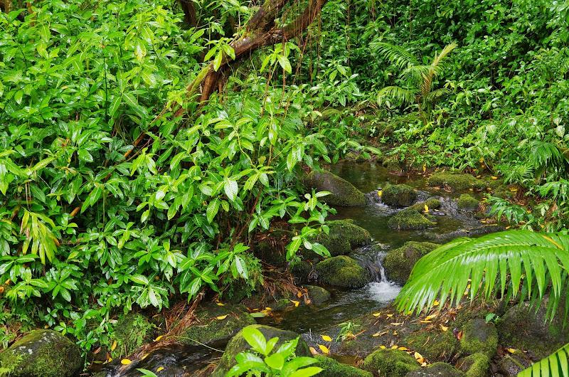 06-23-13 Big Island Waterfalls, Travel to Kauai - IMGP8838.JPG