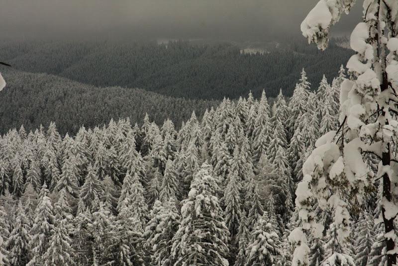 Predeal Azuga schi de tură zăpadă brazi