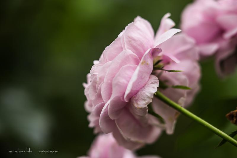 Rosa Sidonie Rosa-sidonie-130720-48rm