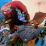 Unkle Luc's profile photo