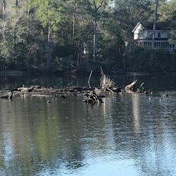 Fowl Marsh from Boat Feb3 2013 072