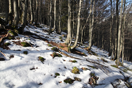 Snehom pokrytý les